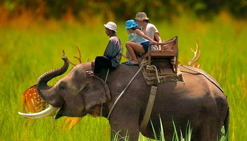 Elephant Safari Booking in Corbett