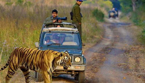 Jeep Safari Jim Corbett National Park
