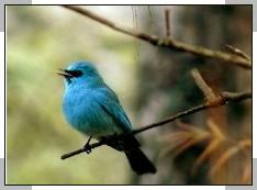 bird watching in corbett