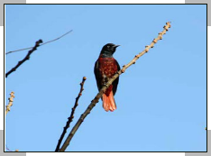 Jim corbett birds